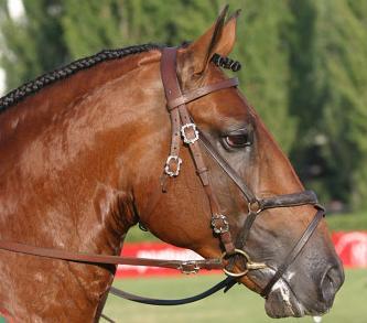 Algarve Horse Riding Garrano